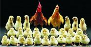 Niçin Doğal Köy Yumurtası ?
